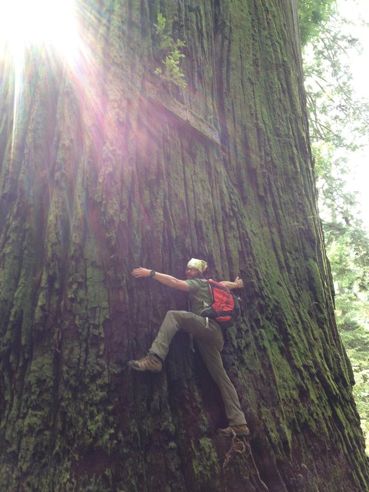 treehuggers.  <3  Redwood Forest.   kids sport helmets www.allsporthelmets.com