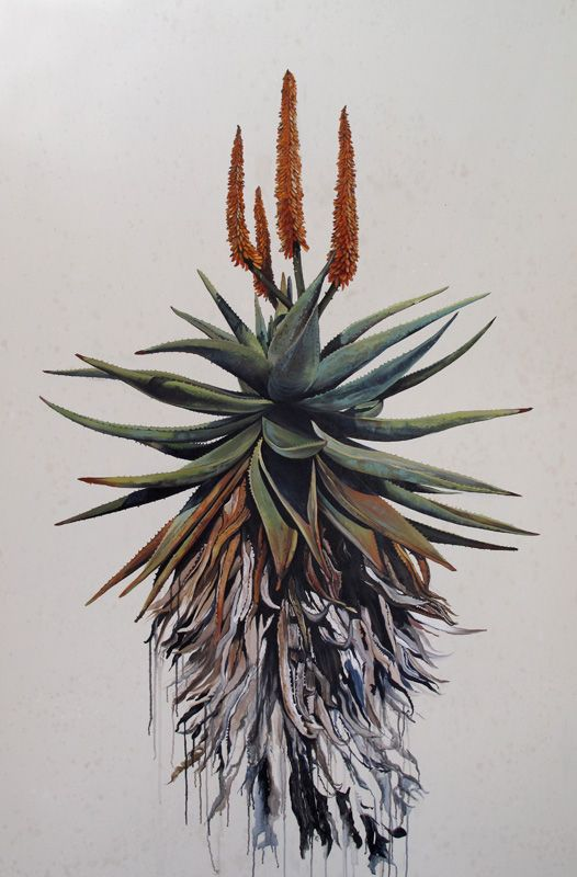 kurt pio, aloe. Oil on canvas