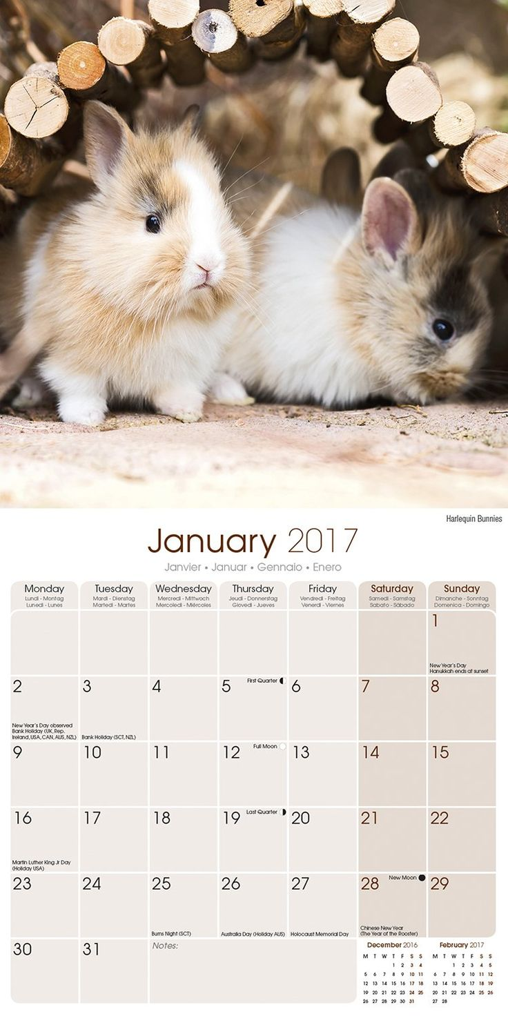 Rabbit Calendar - Cute Animal Calendar - Calendars 2016 - 2017 Wall Calendars - Animal Calendar - Rabbits 16 Month Wall Calendar by Avonside: MegaCalendars: 9781782088752: Amazon.com: Books