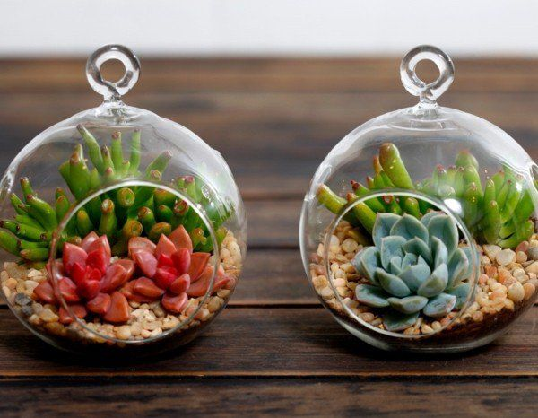 1000 ideas about mini terrarium on pinterest terrarium marimo moss ball and marimo - Kit terrarium plante ...