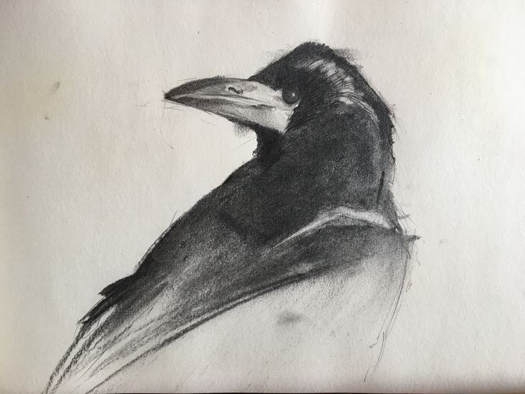 Crow. Charcoal, pencil.