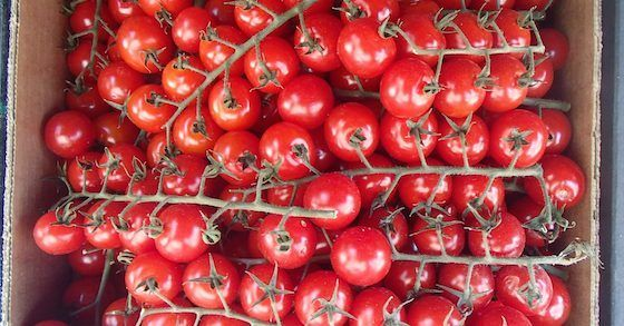 Wer keinen eigen Garten hat, muss auf den Anbau des eigenen Gemüses nicht verzichten. Viele Gemüsesorten lassen sich problemlos auch in der Wohnung ziehen.: