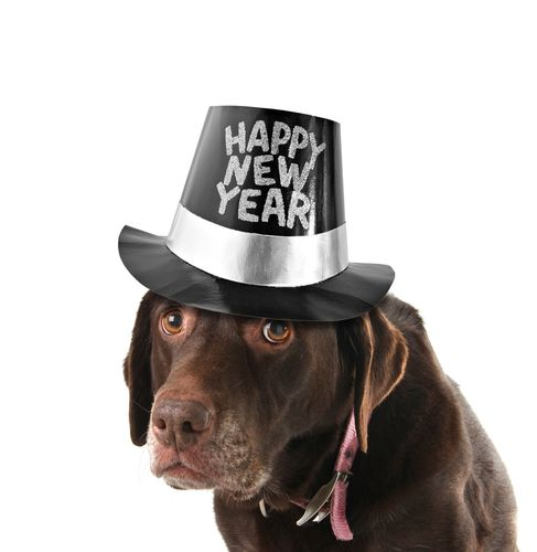 New Year's Eve Tips for Your Dog | Dog 101 | Holiday