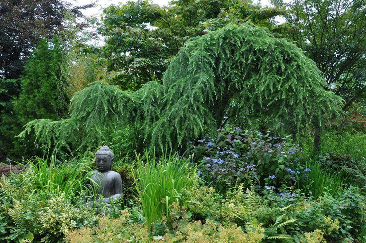 ... ideas diy ideas jardin de forward jardin de conifères google suche