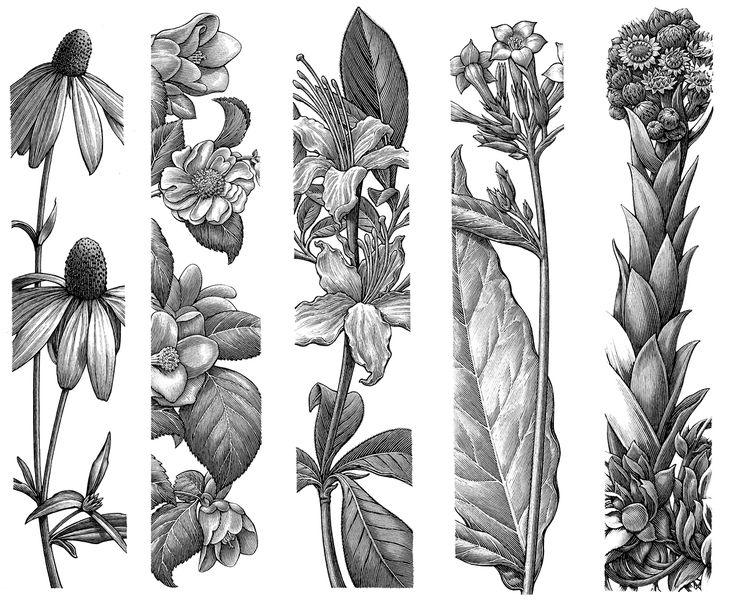 Flora and Fauna pen illustrations