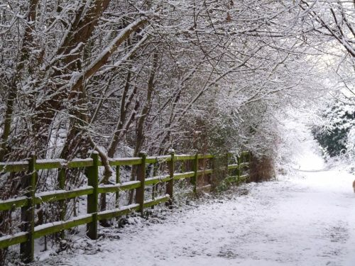 "pagewoman: ""  Snowy Country Lane, Leicestershire, England by Mike Freeman """