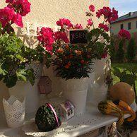 pelargonie, dynie, jesienny taras