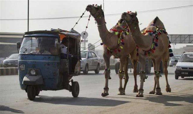 Image result for camel tow
