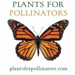 PLANTS FOR POLLINATORS ONLINE ORDERS SHIP FROM TN Butterfly milkweed - Asclepias tuberosa,  Common milkweed - Asclepias syriaca Swamp milkweed - Asclepias incarnata   All seed are pesticide free and pollinator safe!