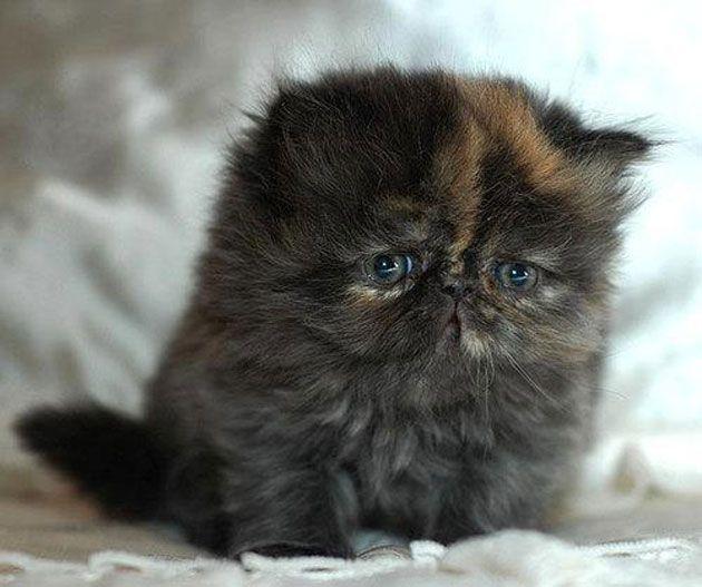 Cute Sad Kitten | myideasbedroom.com