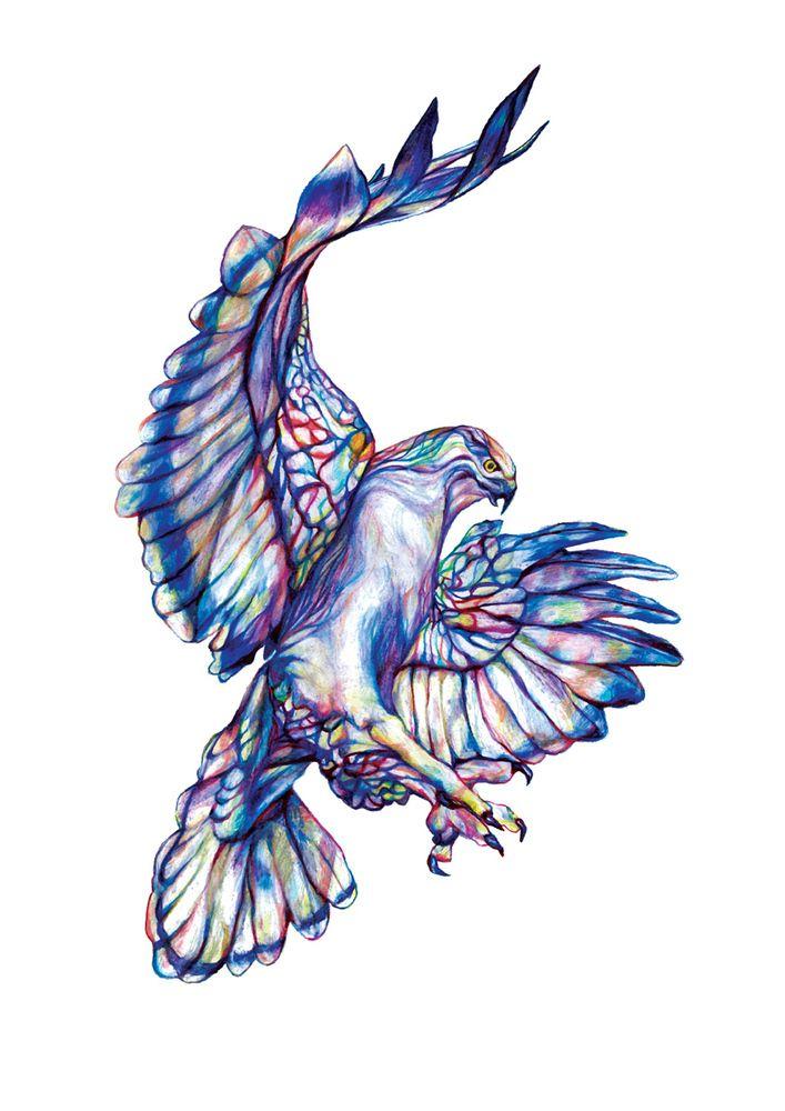Hawk  by Claudine O'Sullivan A3 signed print on 200gsm gesso paper €45 from JamArtPrints.com. International shipping -  #jamartfactory #jamartprints