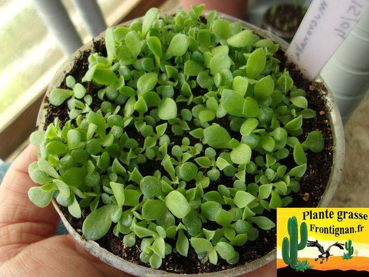 17 meilleures images propos de dans le jardin en for Conseil sur les plantes