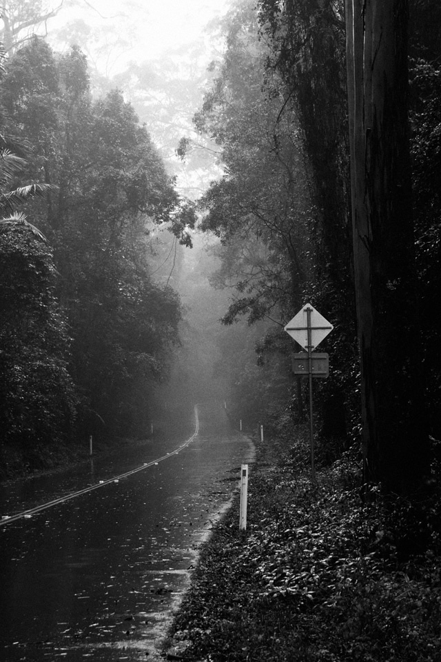 Rain and fog on Mt Glorious roads. Its just started raining again which turns the mountain into a magical misty environment to explore.