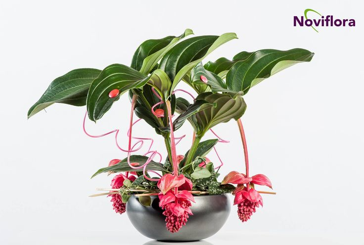Floral TweetJam Noviflora&FlowerFactor @Flowerfactor