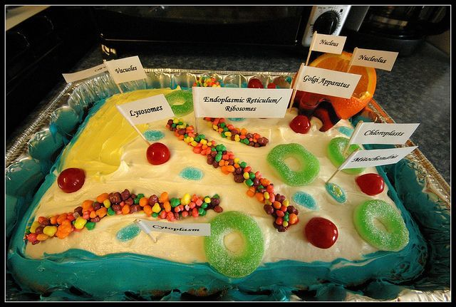 Plant cell cake This will come in handy someday: