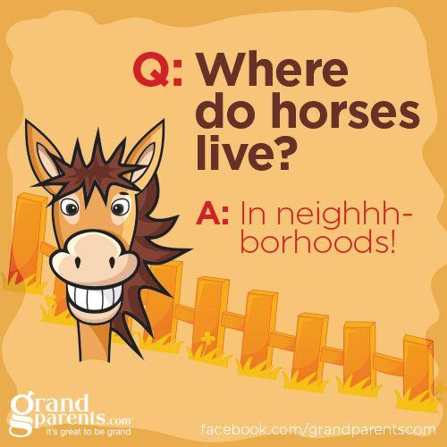 #jokes #kids #humor #horses