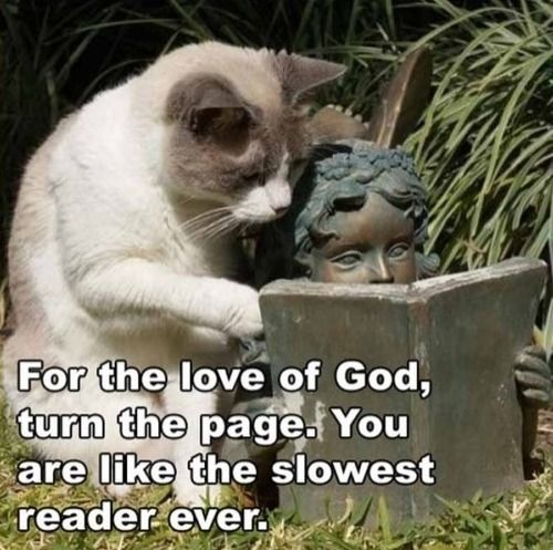 For the love of God: Cats, Books, Reading, Animals, Funny Stuff, Funnies, Funny Animal, Slowest Reader