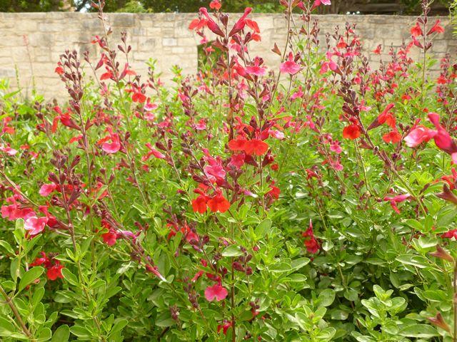 Flower Garden Ideas Texas 171 best an english garden in texas? images on pinterest | flower