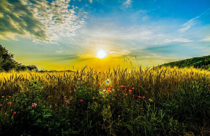 Nature Force Field by Talamon Joze Berta on 500px