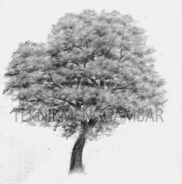 Cara menggambar pohon dengan pensil graphit