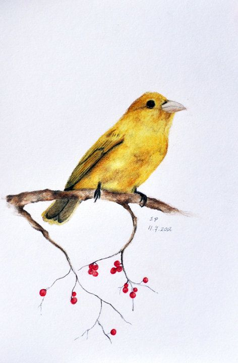 Bird and red berries , Original coloured pencil drawing 5 ...