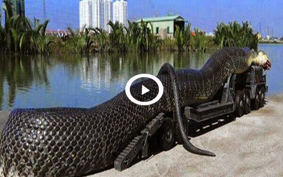 VIDEO : Giant Anaconda Found Dead, Whats Inside The Body is Really ...