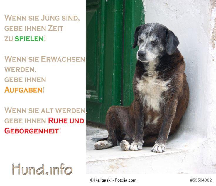 Gebe Hunde was Sie brauchen – Thomas Petzold