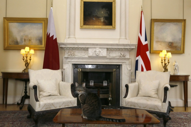 Jan. 22, 2013. The cat of British Chancellor of the Exchequer sits on a table in a room in Downing Street, London.   The Best Pictures of the Week: January 18 – January 25 - LightBox