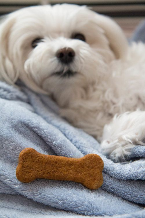 Delicious And Healthy Homemade Dog Treats Made With Pumpkin And