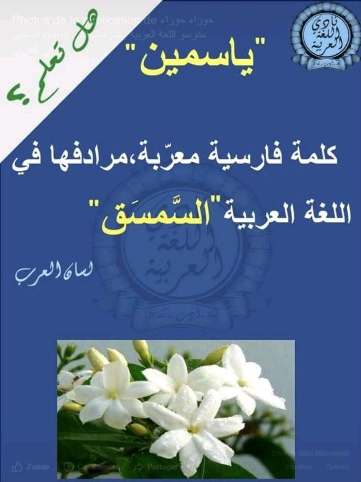 Pin By Shams Masr On معرفه Arabic Language Learning Arabic Learn Arabic Language