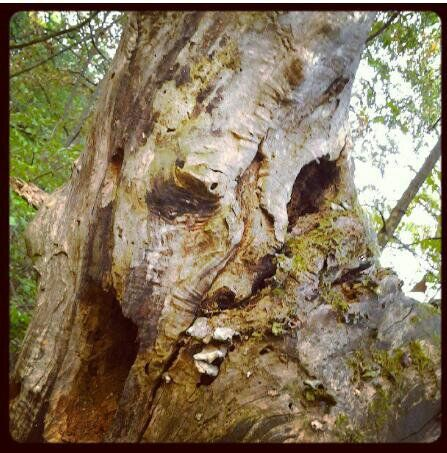 faces in trees images - Google Search