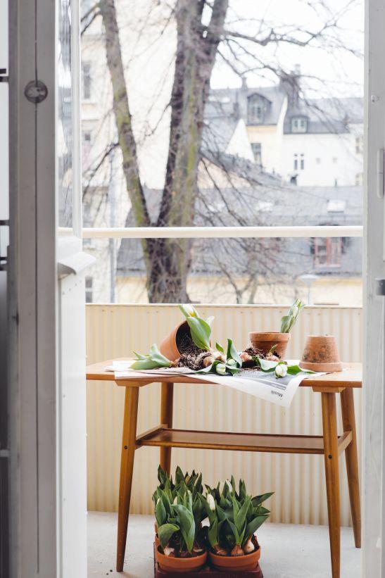 balkong krukor tulpaner balkongbord
