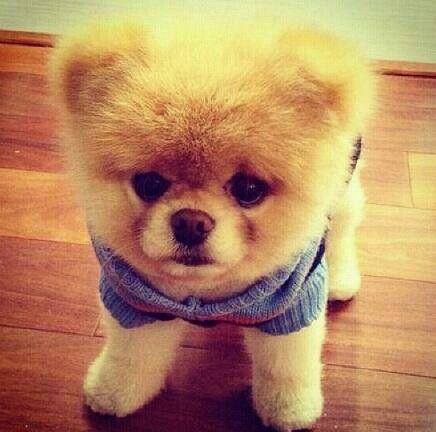 So cute ! Little puppy