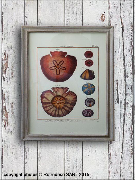 Ce tableau Botanique Oursin, réplique d'une planche ancienne trouvera tpute sa place dans une ambiance bord de mer. Une création Pomax. Sous-verre et cadre en bois patiné blanc.