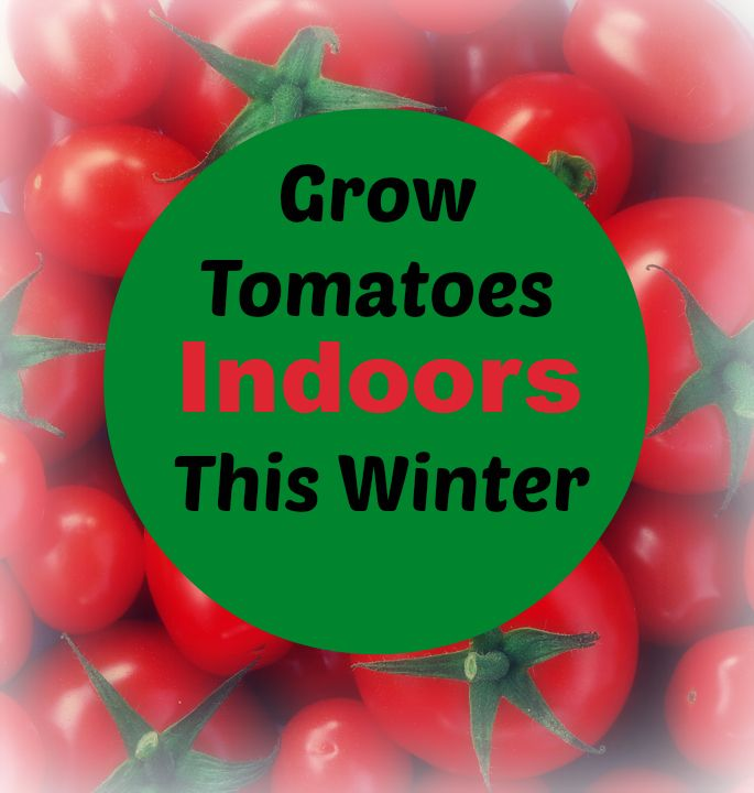 Grow tomatoes indoors this winter.  Wouldn't these be wonderful in February?  I would love to try this in a container and get a head start on our container gardens for this summer.