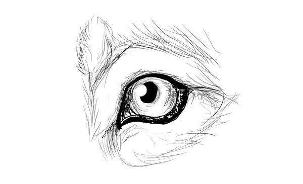 Resultado de imagen para ojos de lobos para dibujar pasos