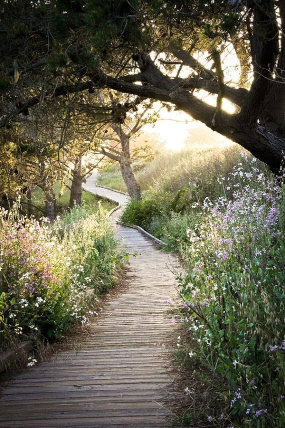 A sunlit trail near Moonstone Beach in Cambria, California.