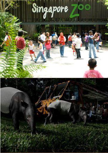 Walau Bukan Terletak Di Tengah Kota Tak Sulit Untuk Pergi Menuju Singapore Zoo Atau Night Safari Ada Shuttle Bus Langsung Yang Melewati Kawasan Populer