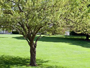 Plant trees around the house strategically (on the south and west sides; shading the air-conditioning unit, if possible) to save up to about $250 a year on cooling and heating.