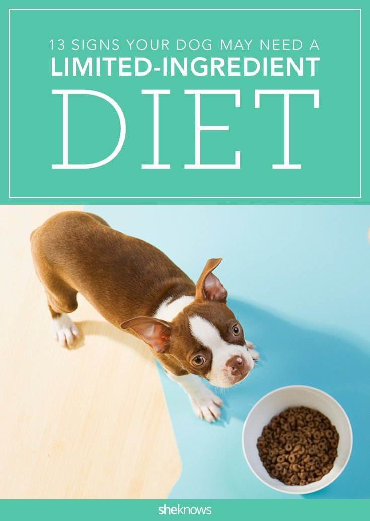 Limiting The Types Of Foods Your Dog Eats May Be Just What The