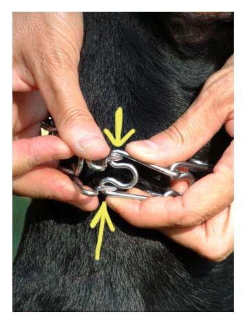 Leerburg Dog Training | How to Fit a Prong Collar