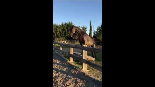 Some of the horse positions don't look safe or healthy, but probably one of the hardest mannequin challenges. What does everyone think? https://video.buffer.com/v/58413206ab0b27c55f8b4571