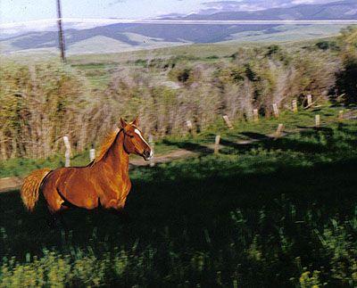 Hoofbeats in Heaven - Equine Quotes