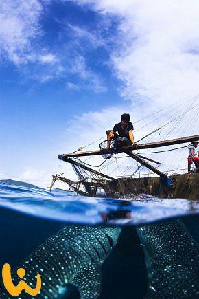 Indonesien steht für weiße Sandstrände, malerische Reisterrassen, saftig grüne Berghänge und tiefe Dschungel. Hier ist für jeden was dabei! #indonesien #wirodive #oceanlover #walhaie #wow #natur #sommer #sonne #uralub #meer #born2dive