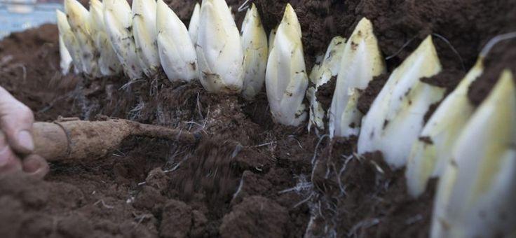 Cultiva tus propios champiñones orgánicos con una técnica sencilla que podrás realizar en tu hogar.