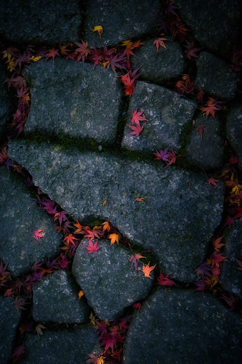 maple leaves on granite paving                                                                                                                                                                                 Plus