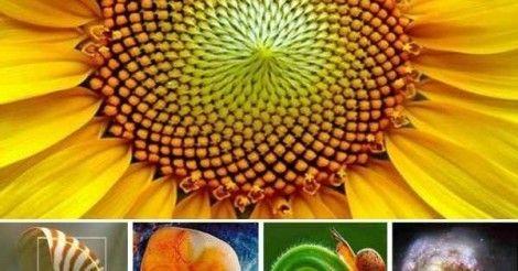 Naturaleza+fractal+y+geometría+sagrada:+¿qué+es+este+misterio+de+la+vida?