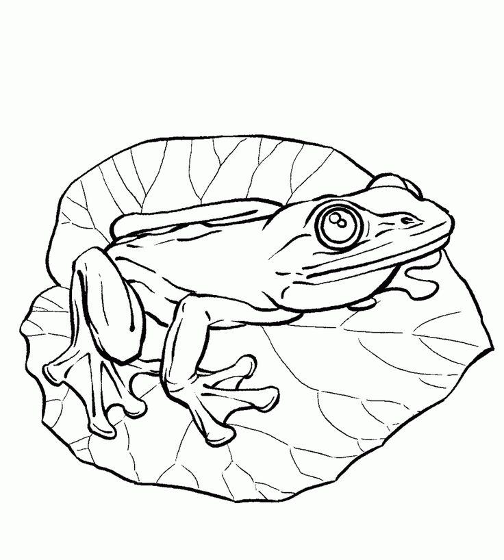 Kolorowanka żaba liści