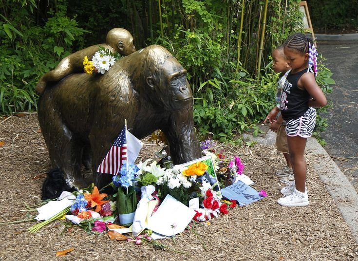 Harambe: Stop making memes of our dead gorilla, Cincinnati Zoo pleads