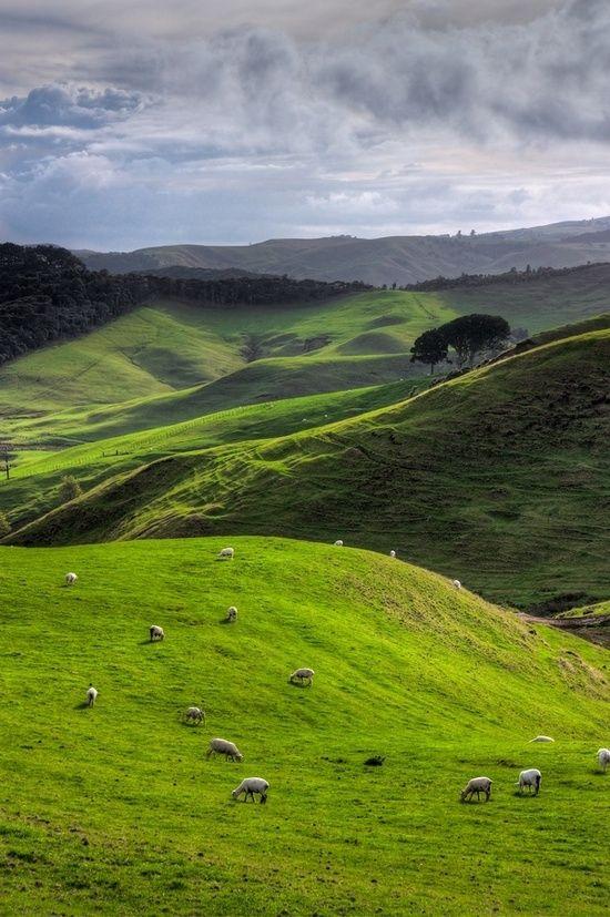 Fuori Rotorua, North Island, Nuova Zelanda da isabella
